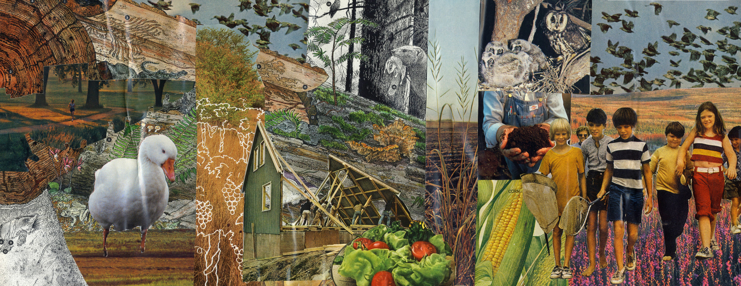 FORAGE CONCEPT COLLAGE