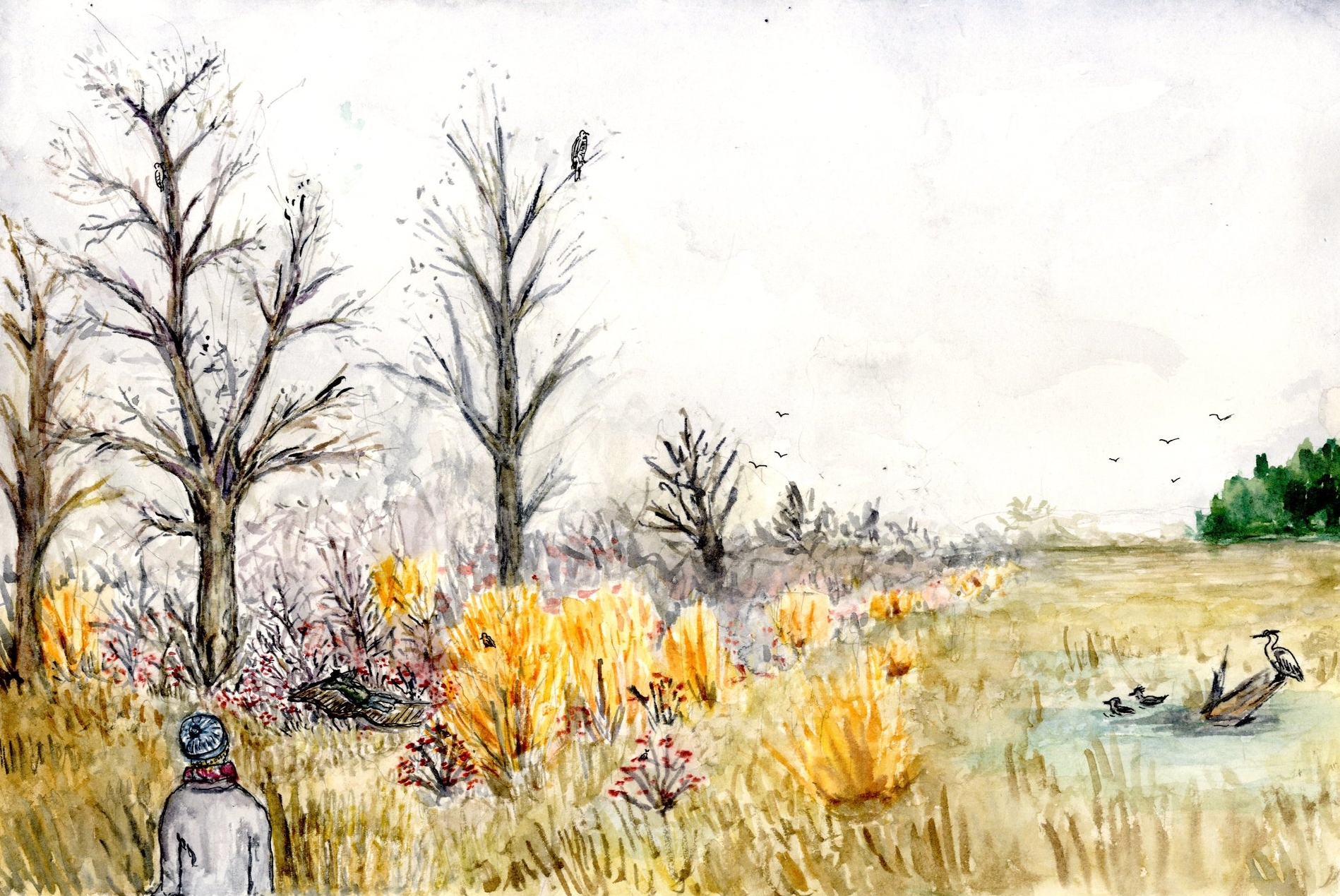 WINTER, RIPARIAN