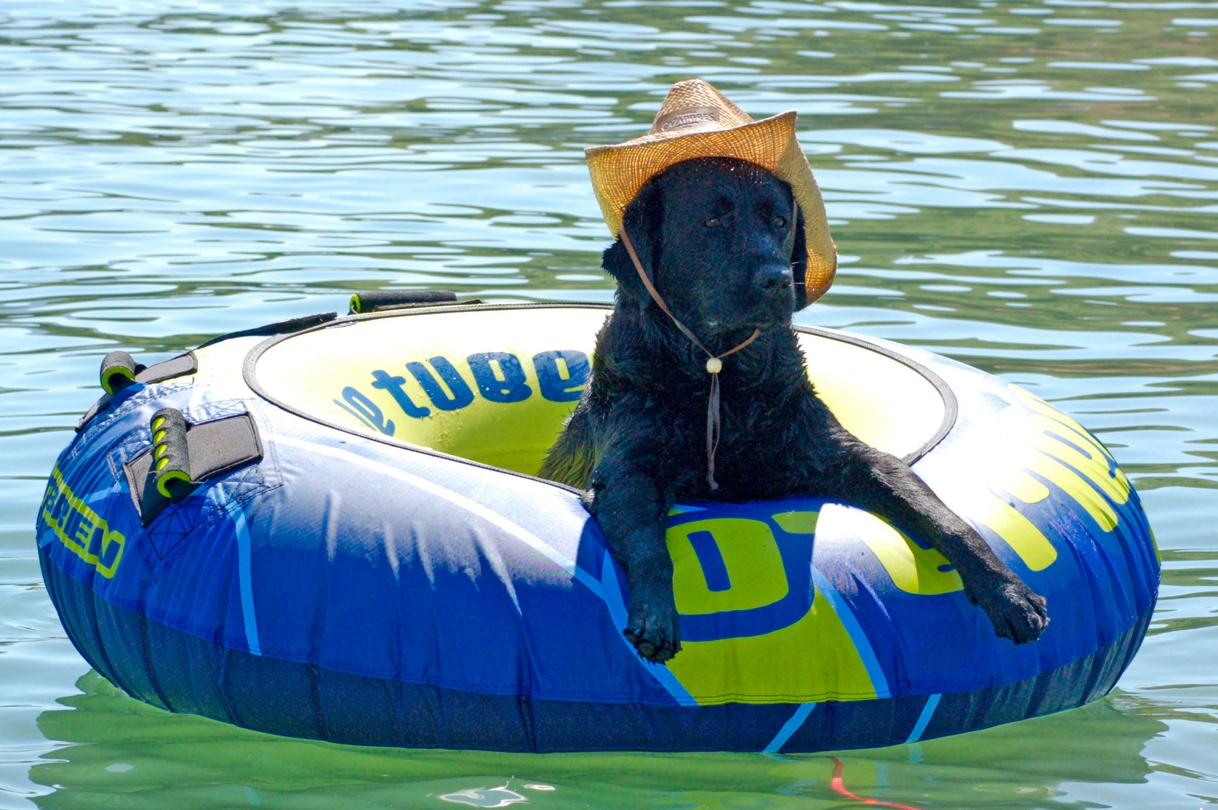 Truffle had style at the lake!