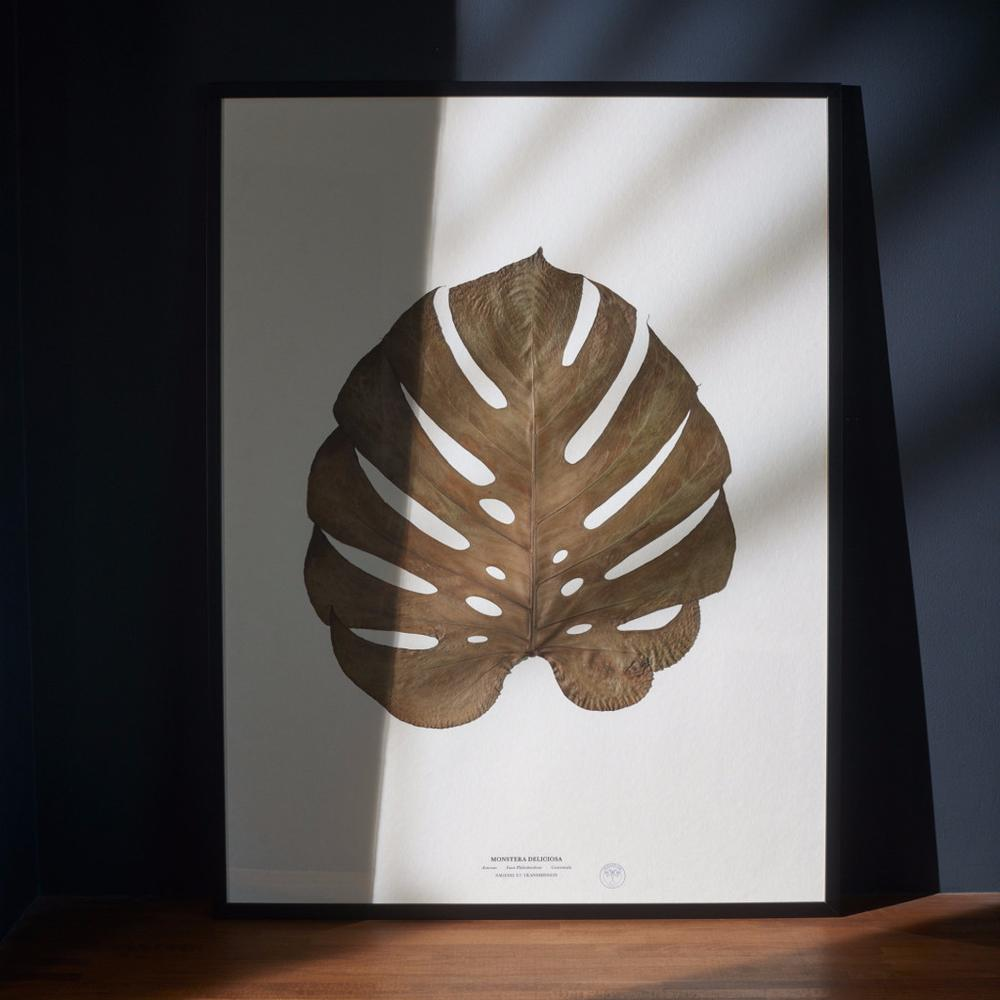 Faux Philodendron - Herbarium