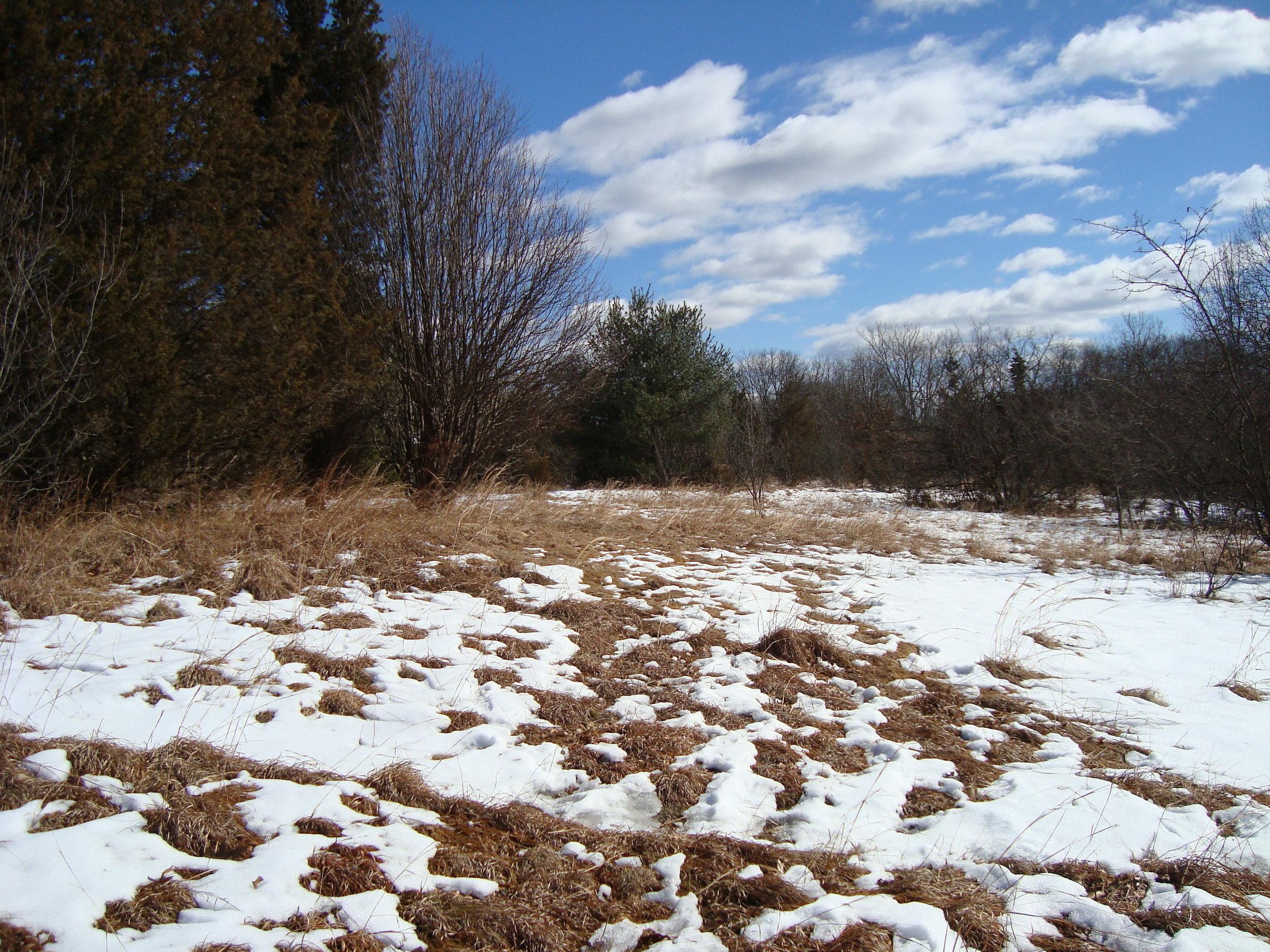 Winter Meadow 2.JPG