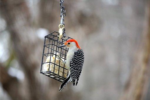 bird-3048640__340.jpg