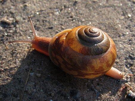 snail-2351707__340.jpg