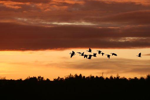 migrating-birds-2769633__340.jpg