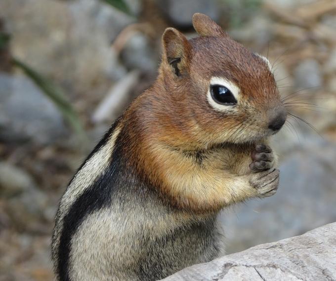 squirrel-185162_960_720.jpg
