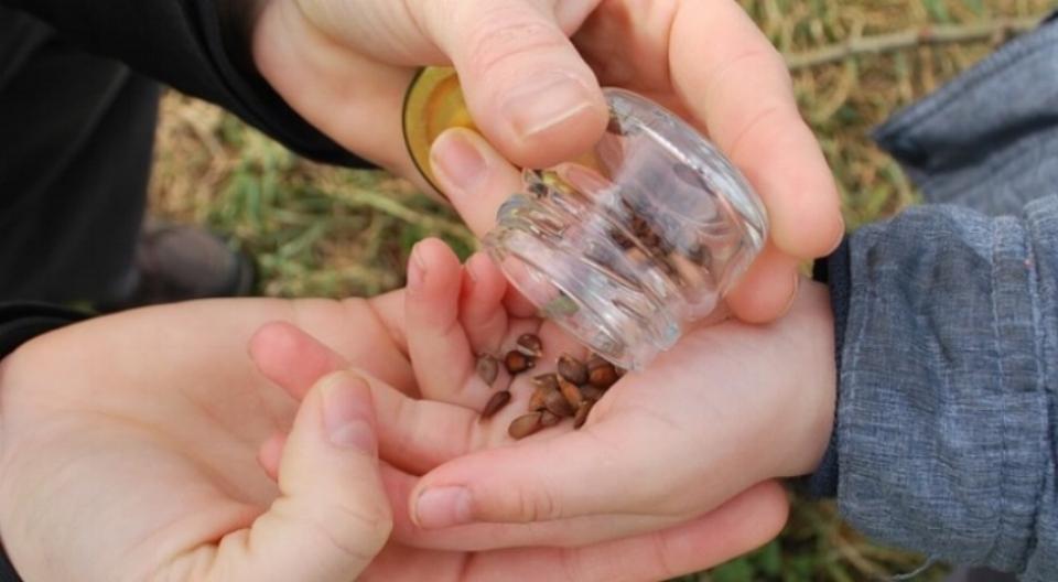 seeds-1217133_960_720.jpg