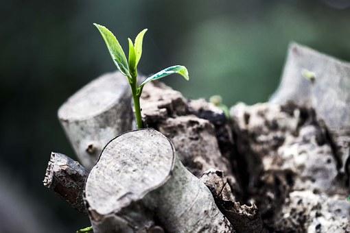grow-781769__340.jpg
