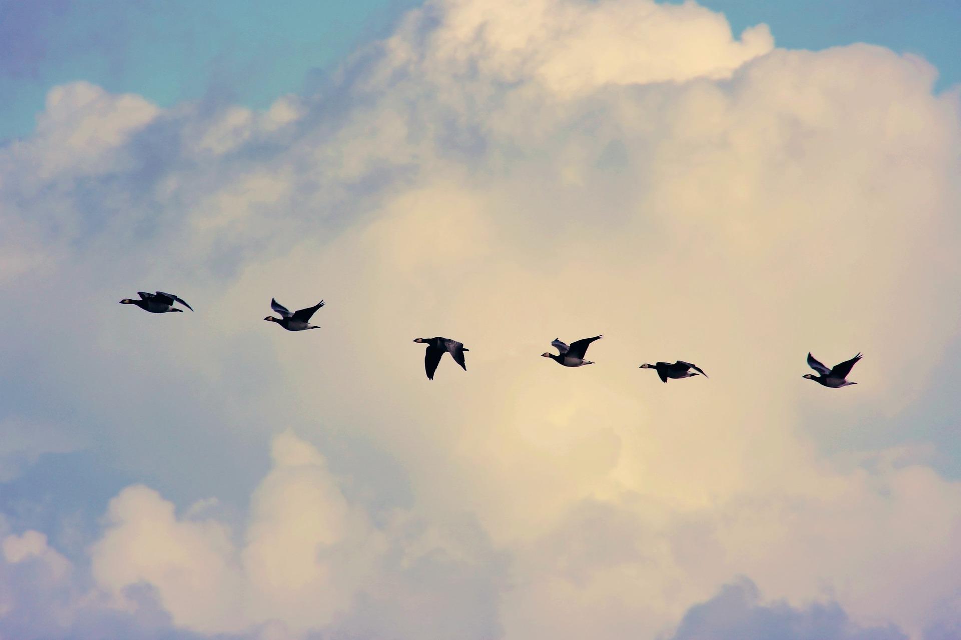 bird-migration-4023842_1920.jpg
