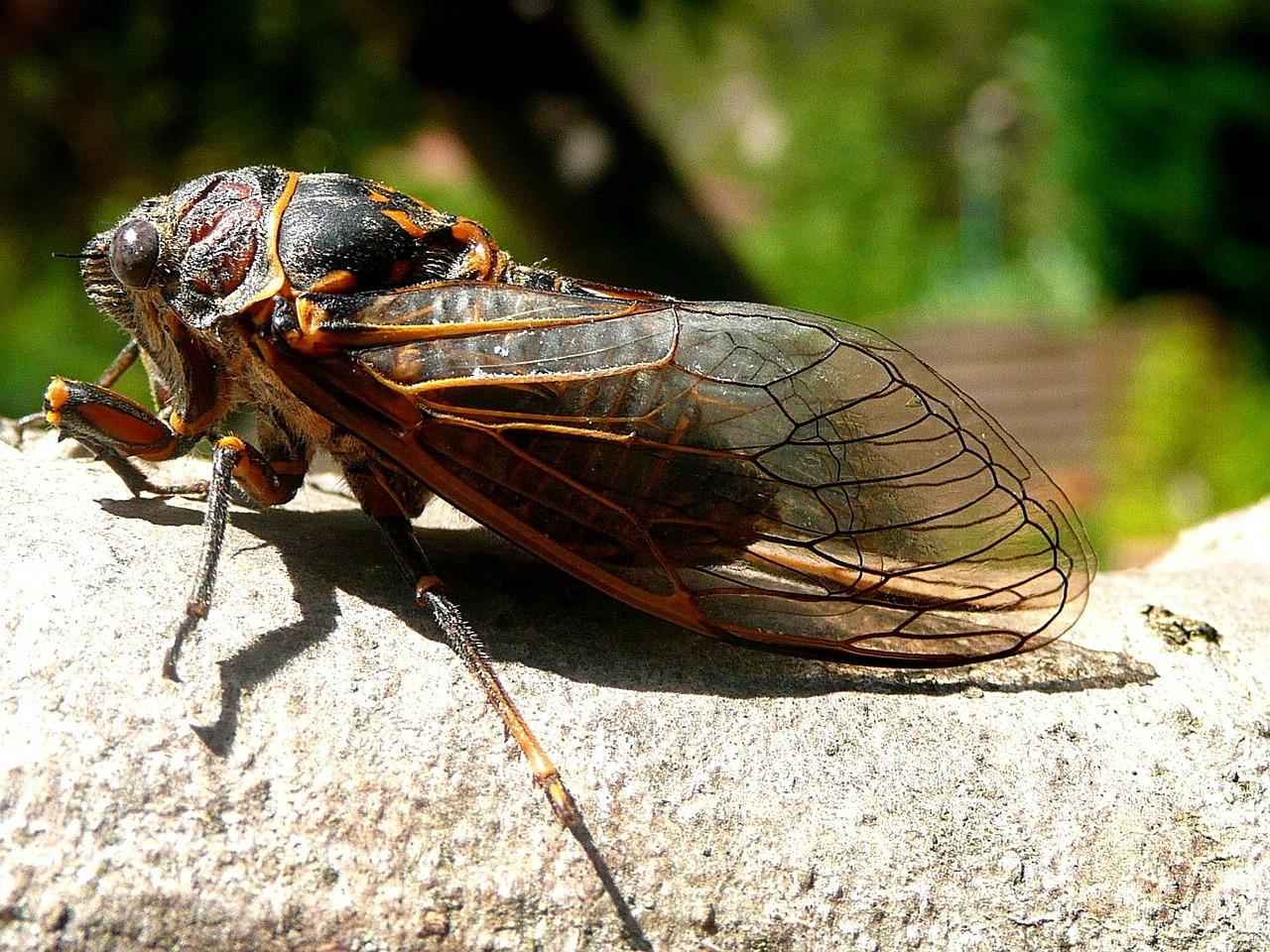 cicada-115913_1280.jpg