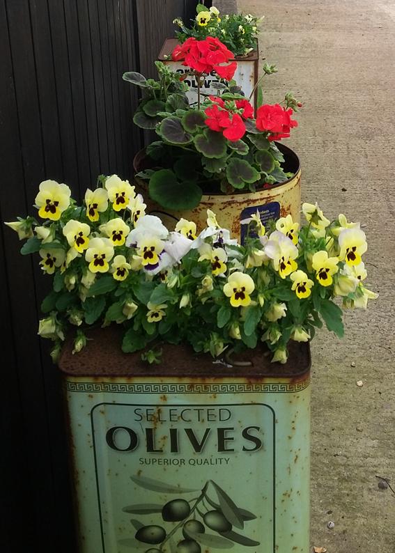 olive tins.jpg