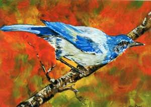 perry-scrubjaybird.jpg