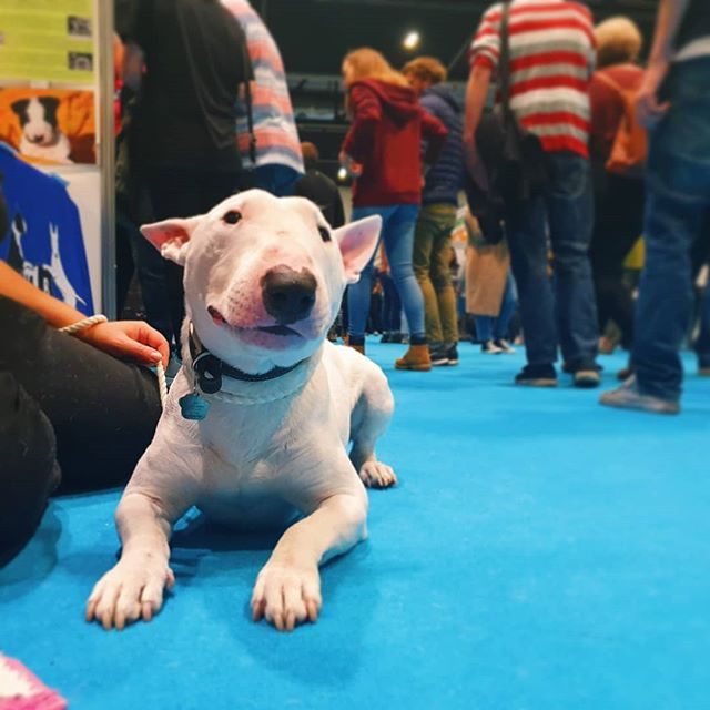 Guys I have had THE BEST DAY. #discoverdogs