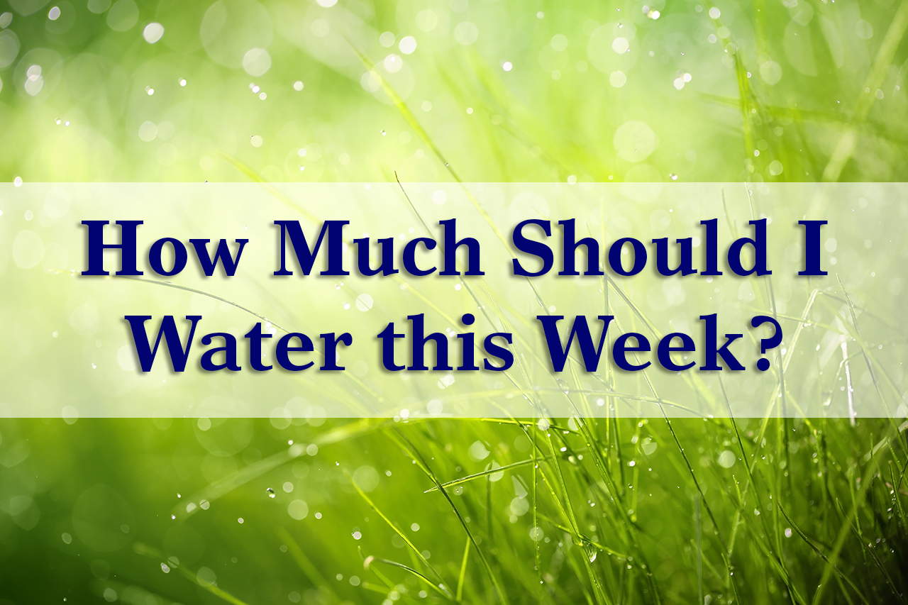 How Much Should I Water this Week.jpg