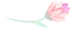 Pink Flower with Stem.png