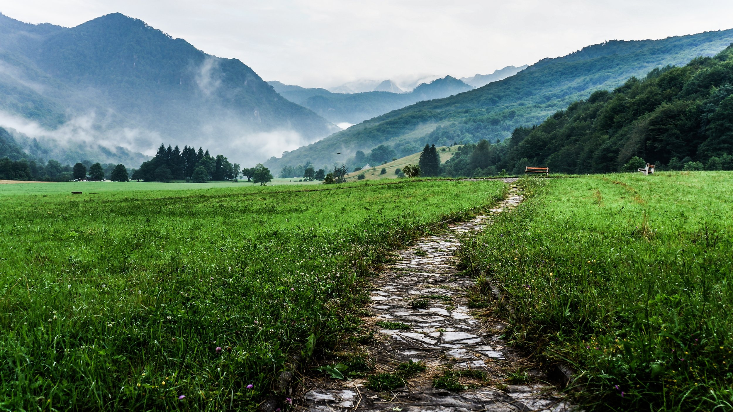 meadow path.jpg
