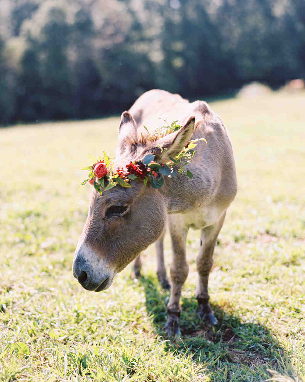 You can always put a flower crown on one of your wedding companions.   Photo by Landon Jacobs