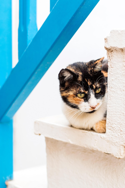 DS Crete Kitty.jpg