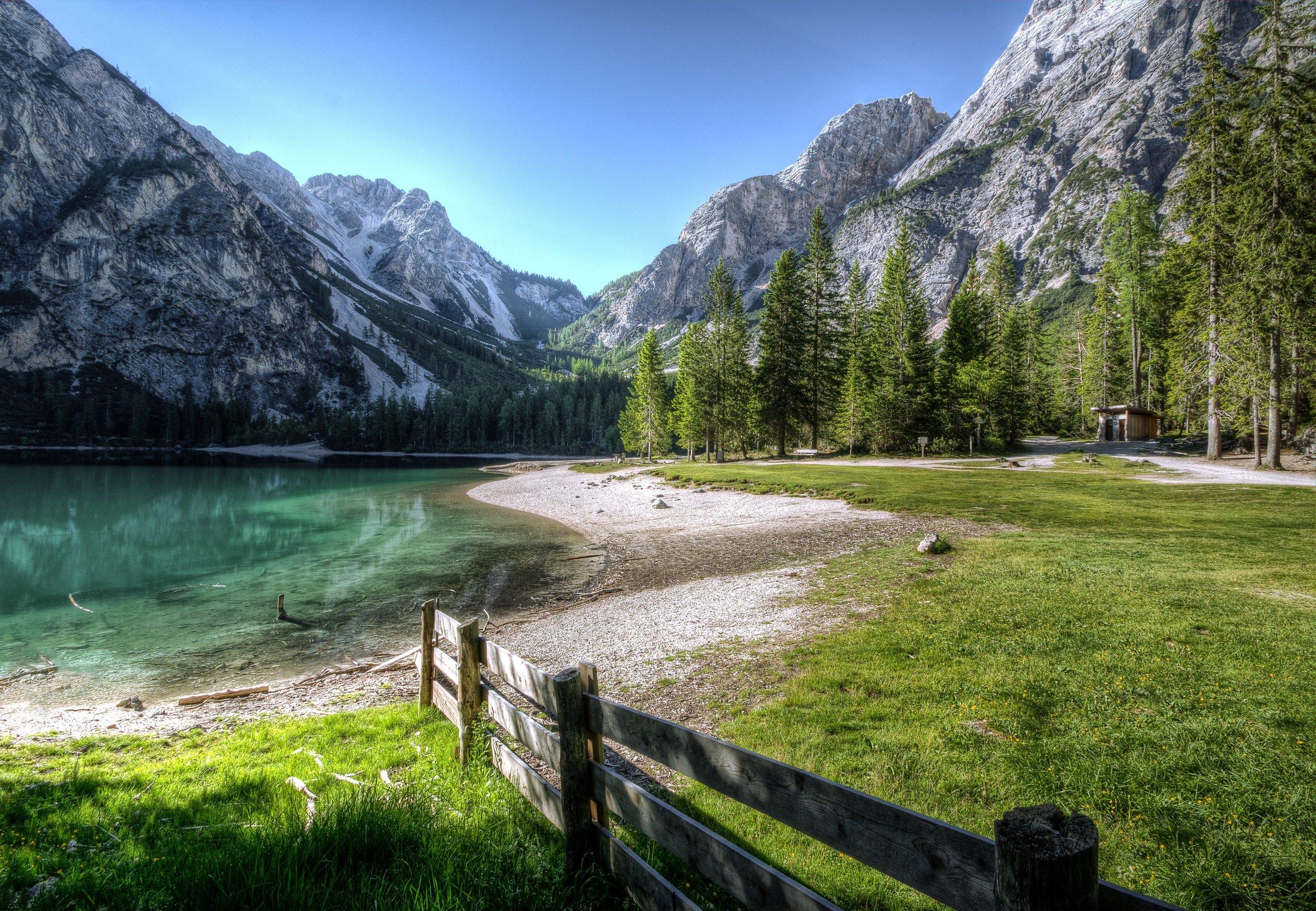 conifer-fence-grass-534164.jpg