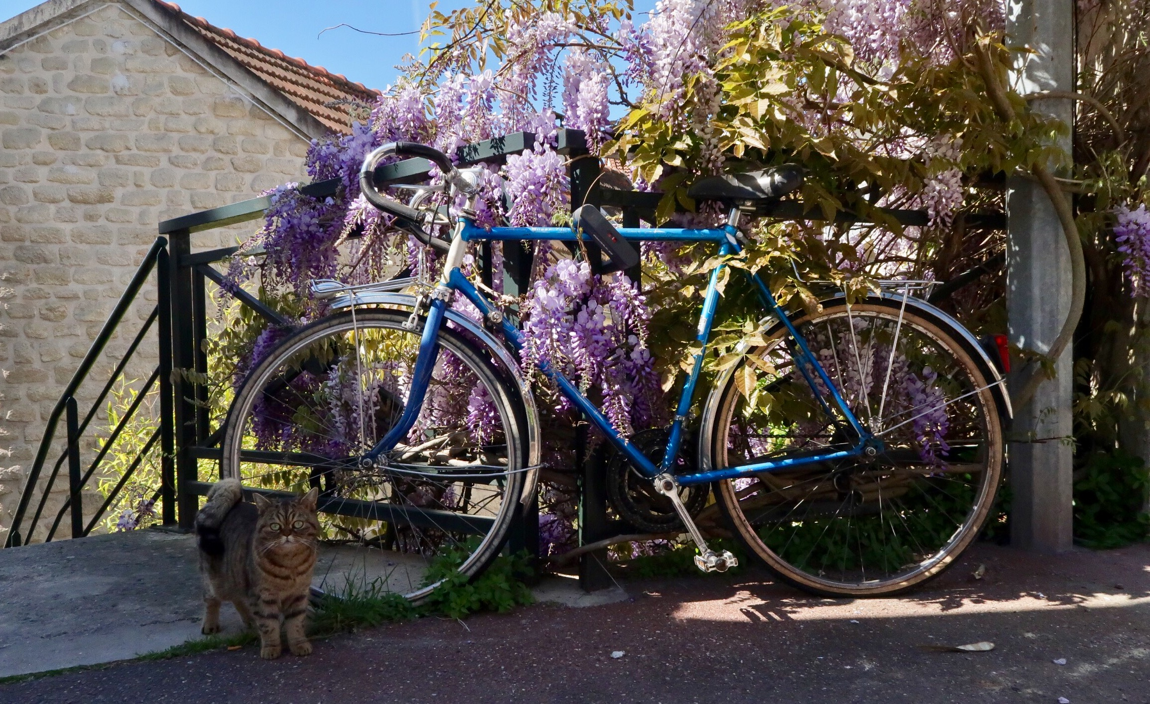 How thoughtful of the bike owner to park up just there, and the cat to stroll by just then...I love this photograph.