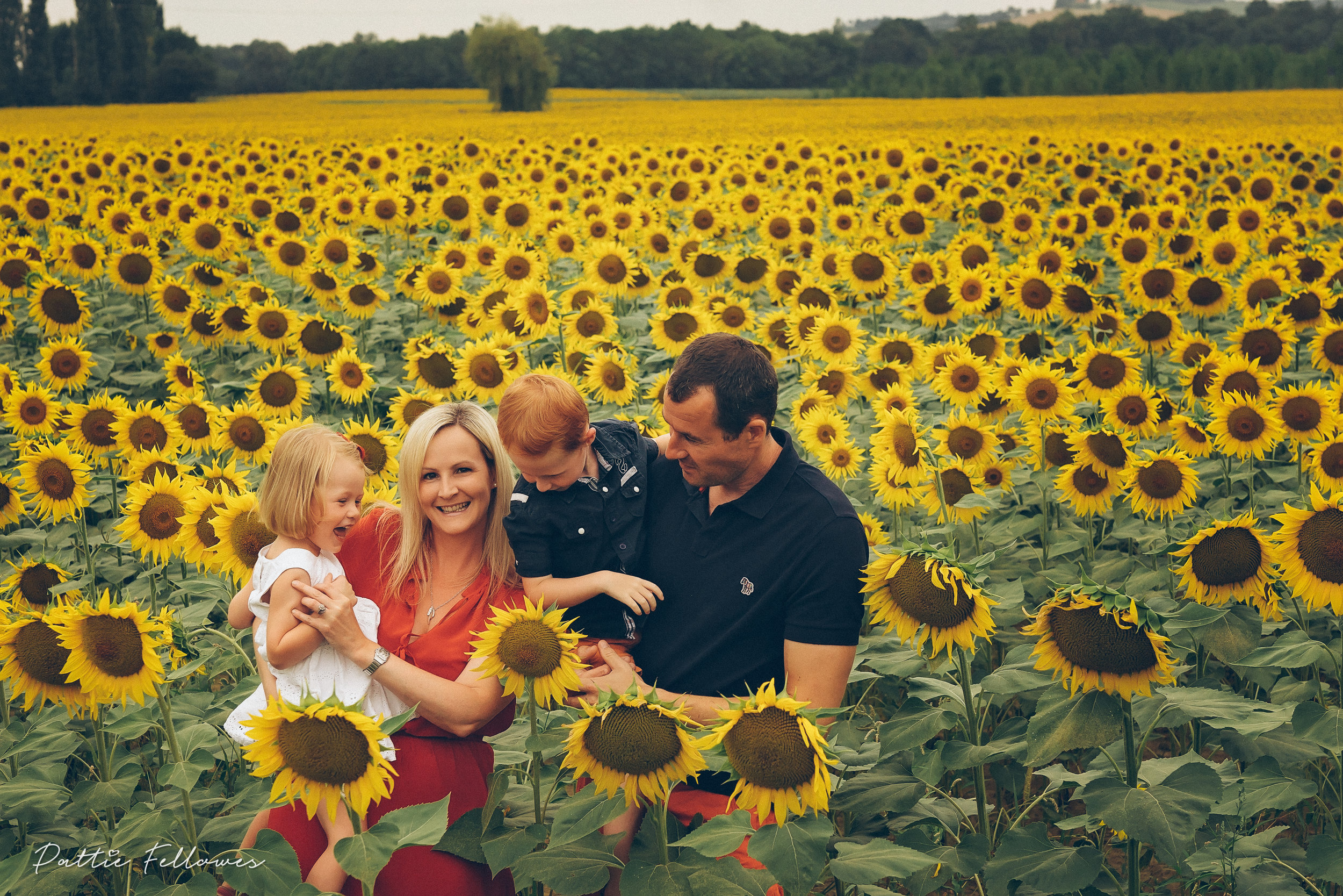 sunflowers2018-6.jpg