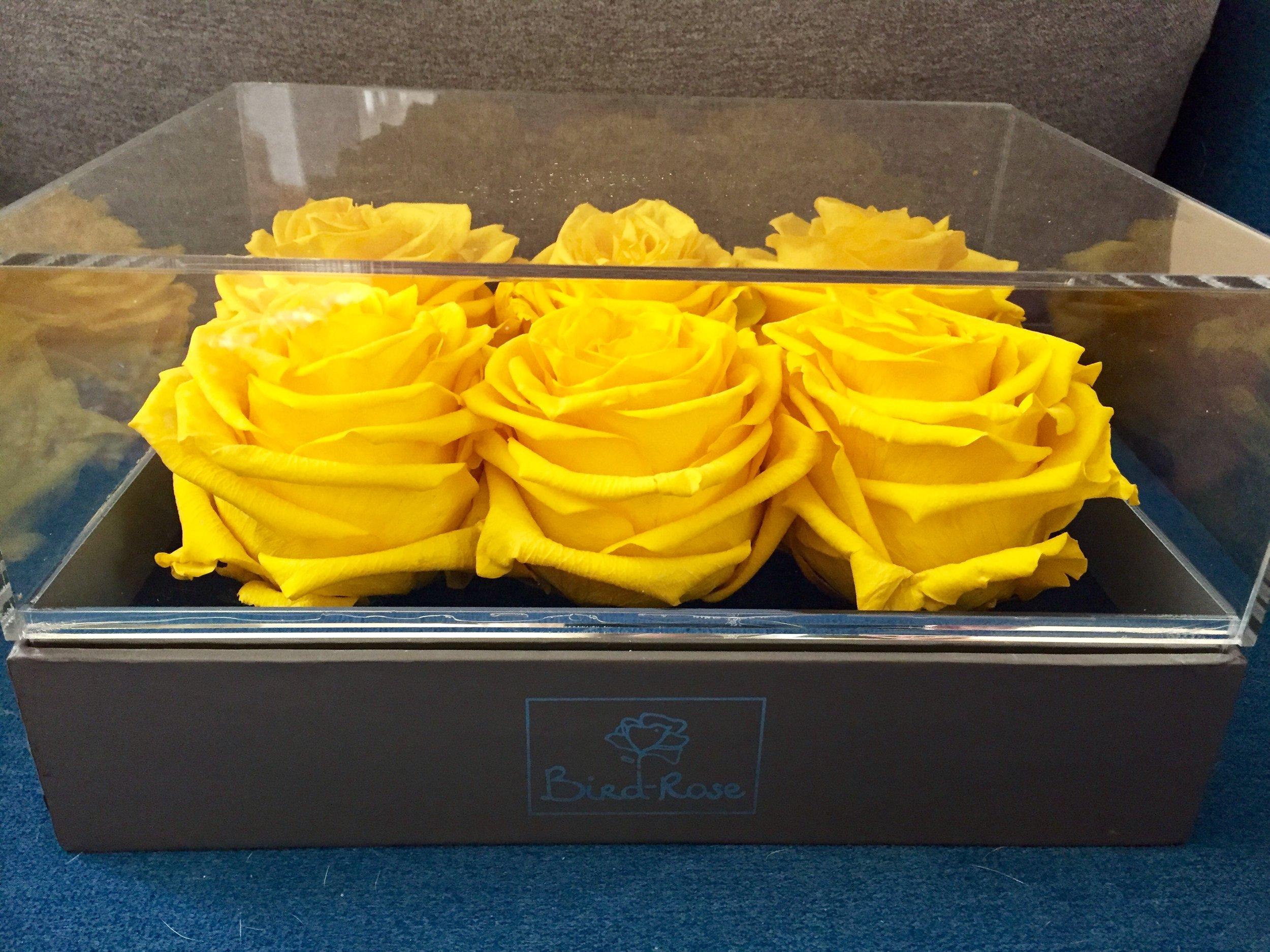 Bird-Rose yellow roses