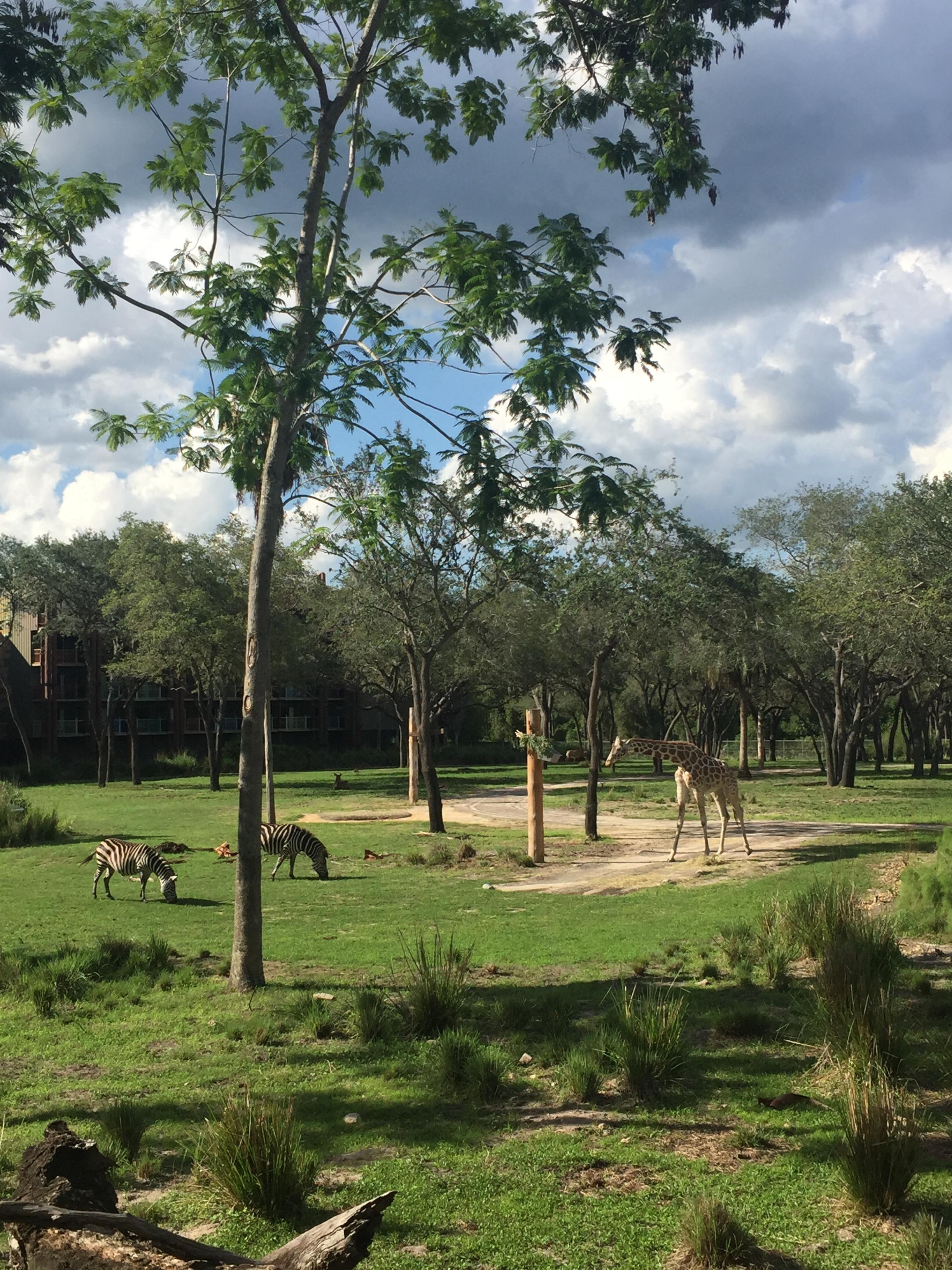 Animals grazing in the Savanna