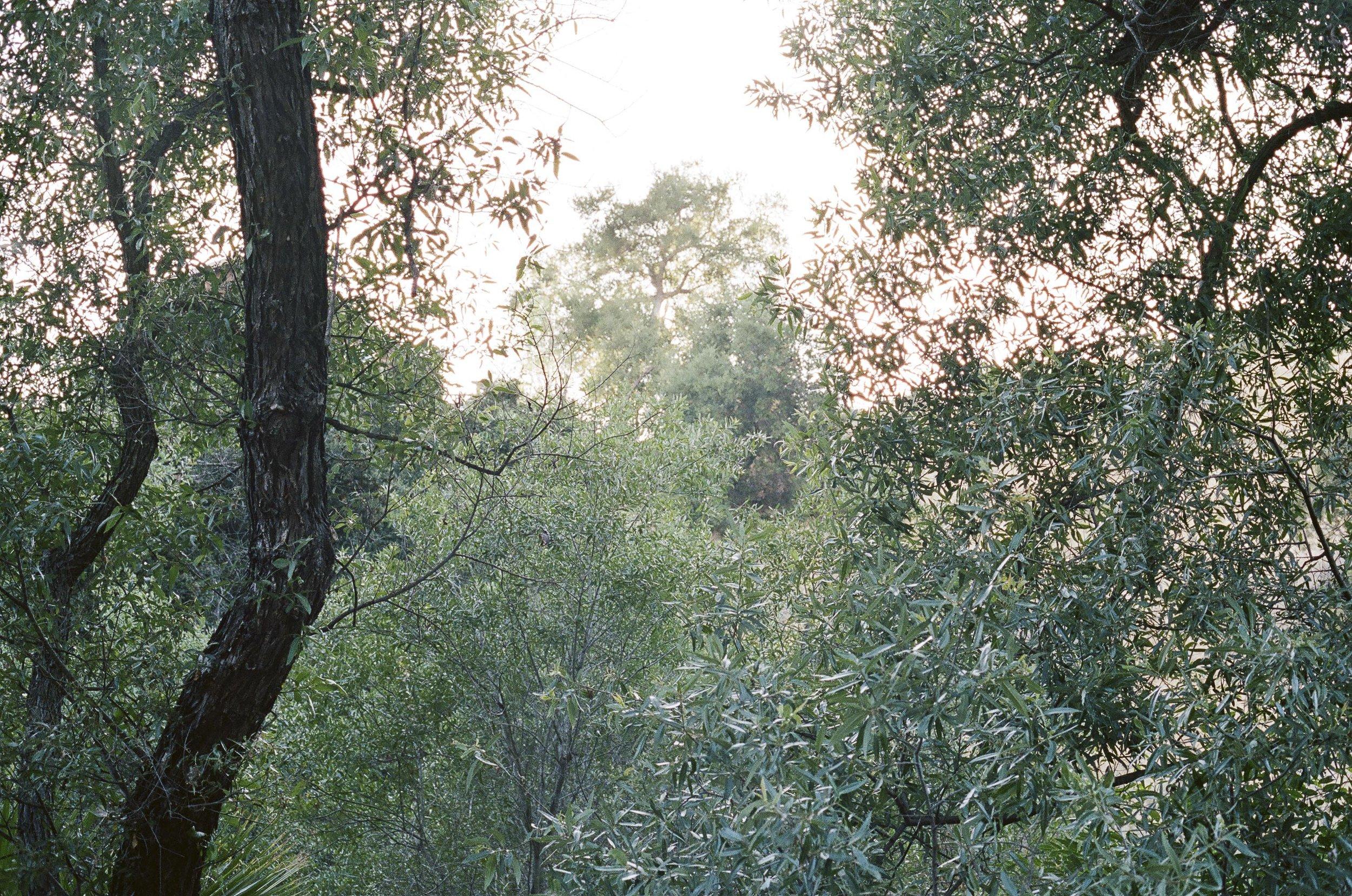 TOPANGA-FILM-1-20.jpg