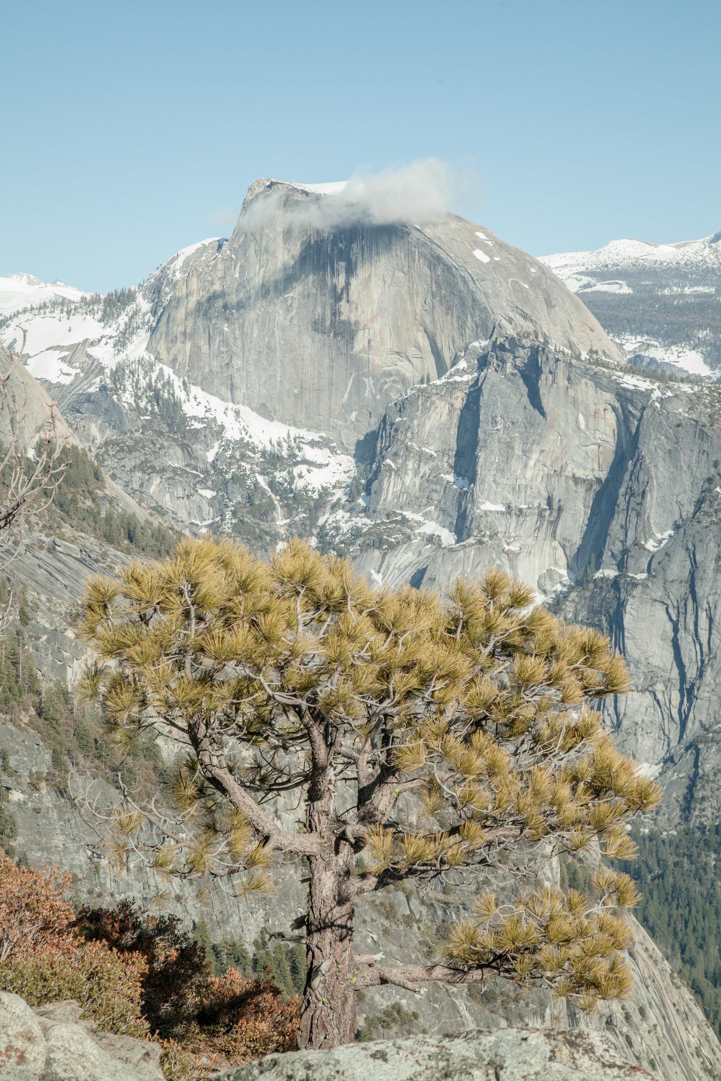 Yosemite1136-365.jpg