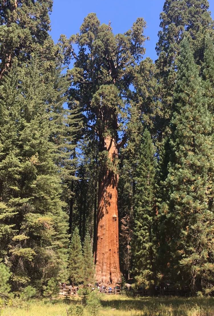 General Sherman - Largest Tree and Largest Living Organism on Earth (by mass)