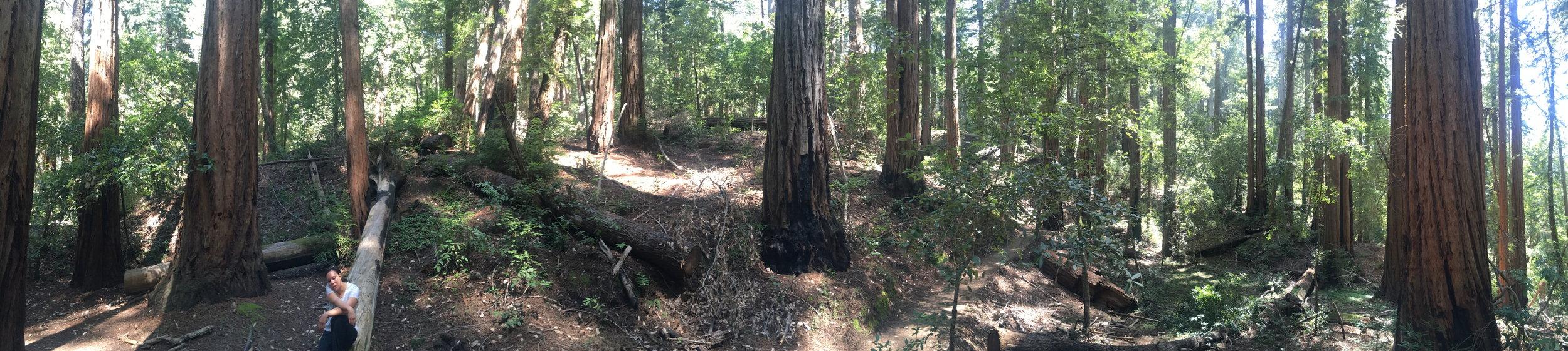 The Berry Creek Falls hike