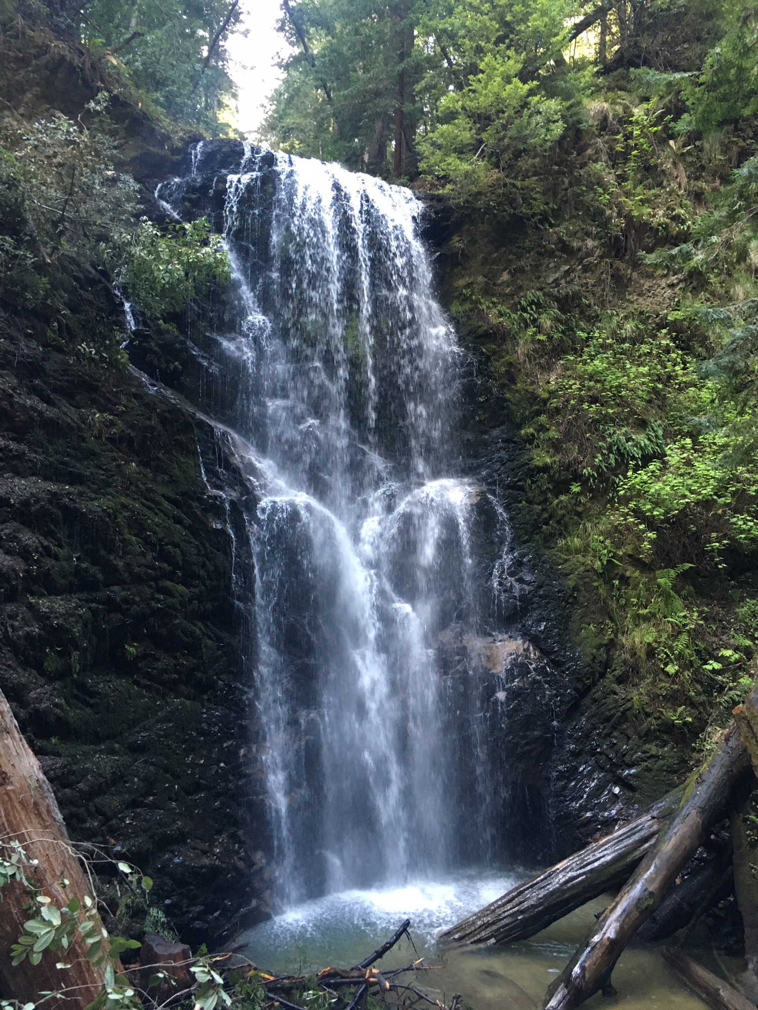 Berry Creek Falls, a must see