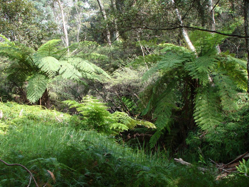 Katoomba Tour Blue Mountains ( flickr )