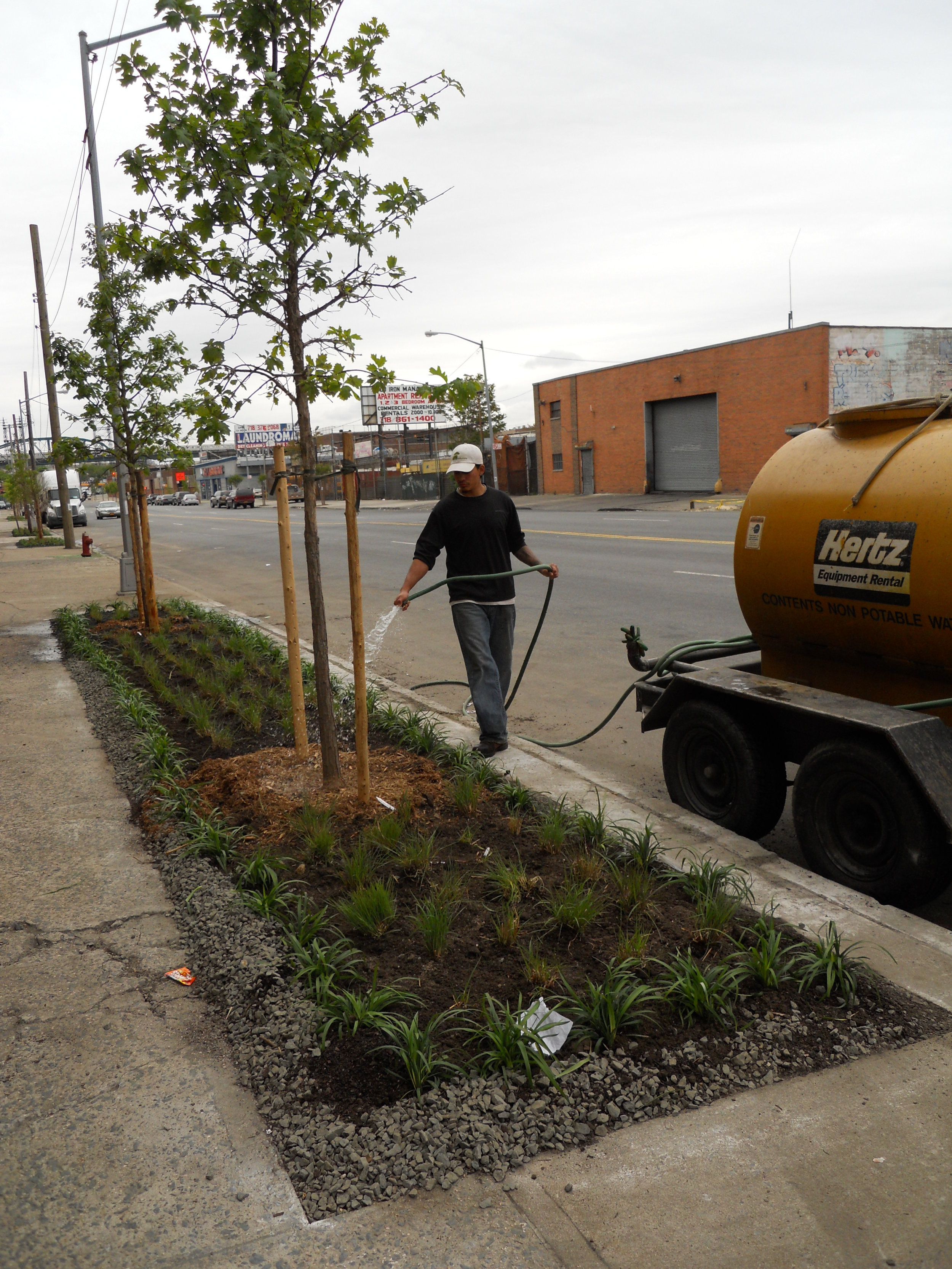 planting 3 -Stormwater capture tree bed.JPG