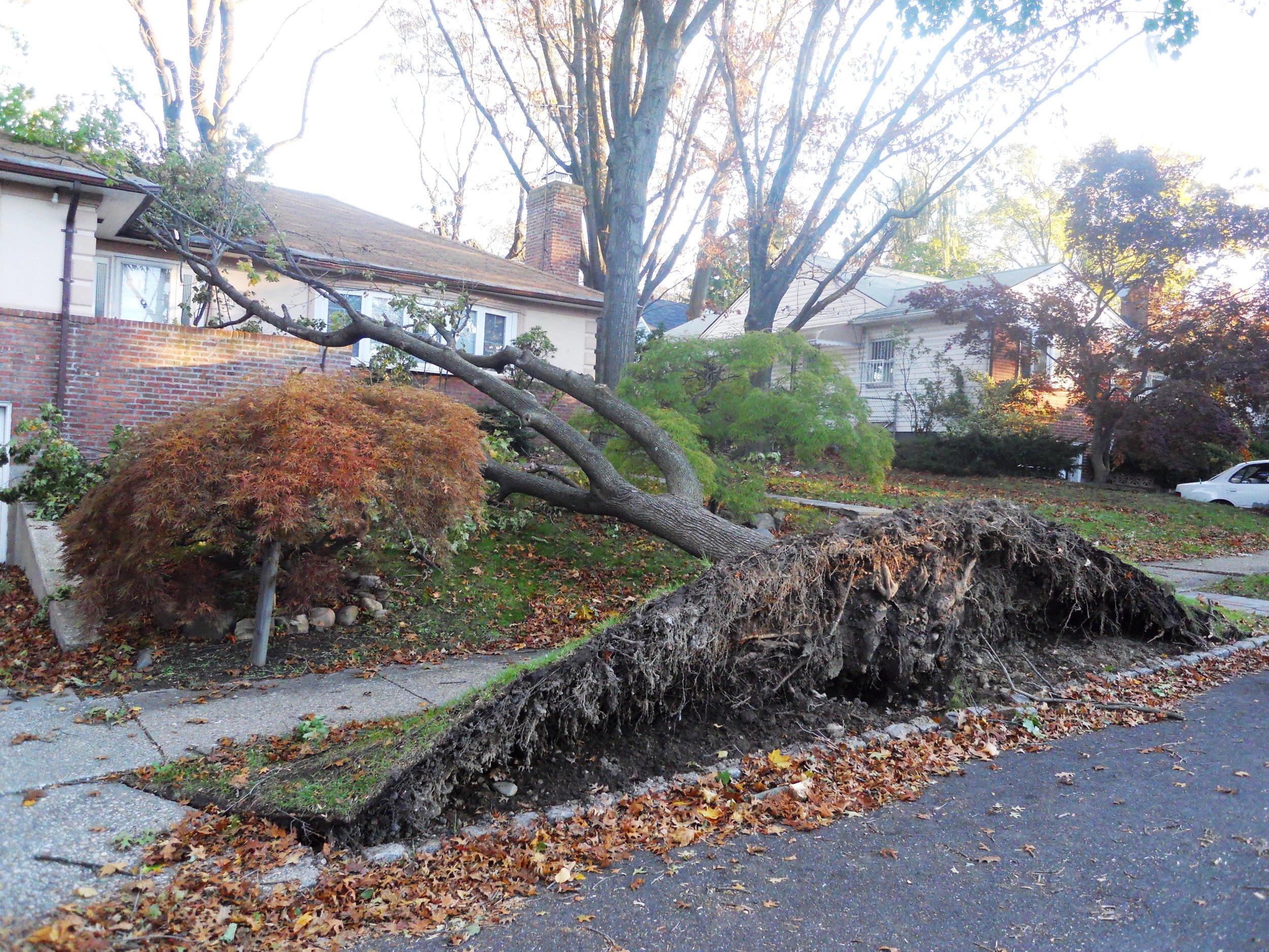 Emergency 2-Sandy Curb Failure.jpg