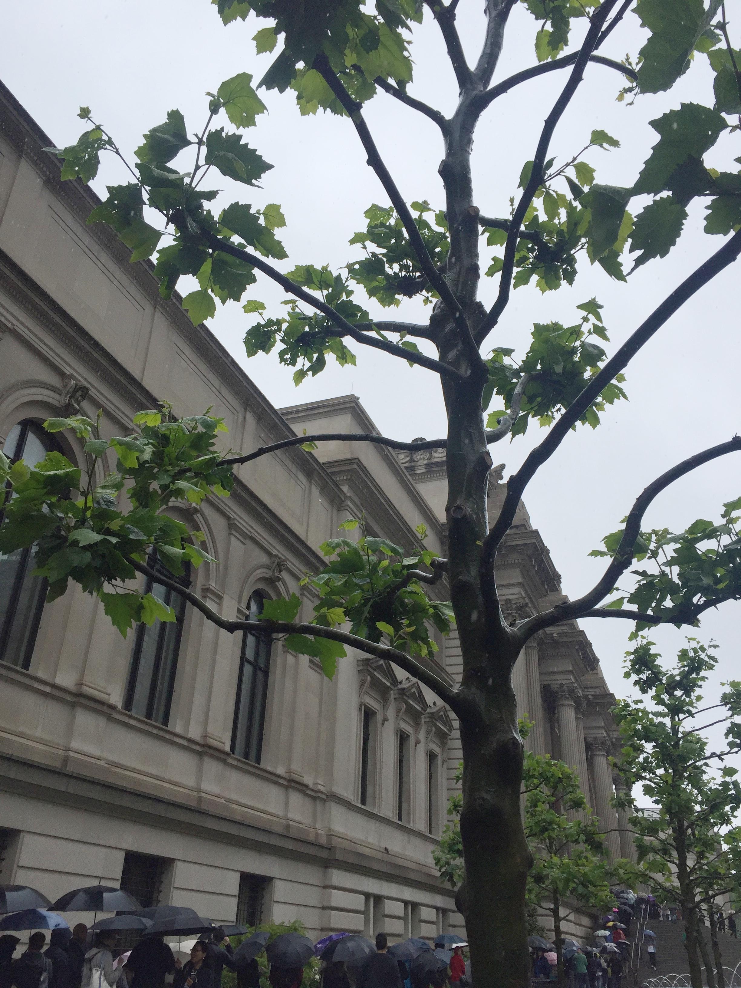 Museum_Met_tree_picture_IMG_9554.JPG