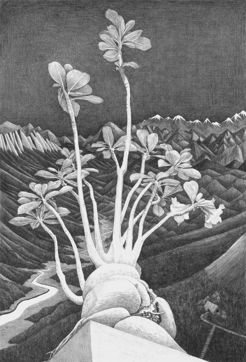 Adenium Obesum