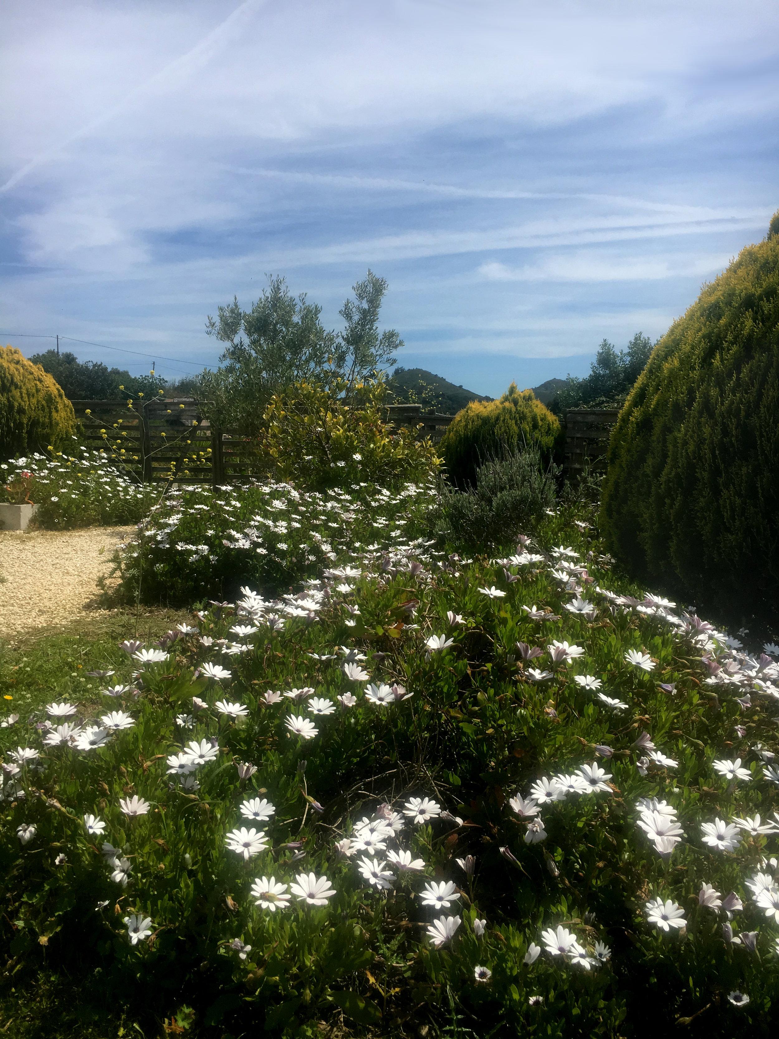 Art-cafe-garden-view.jpg