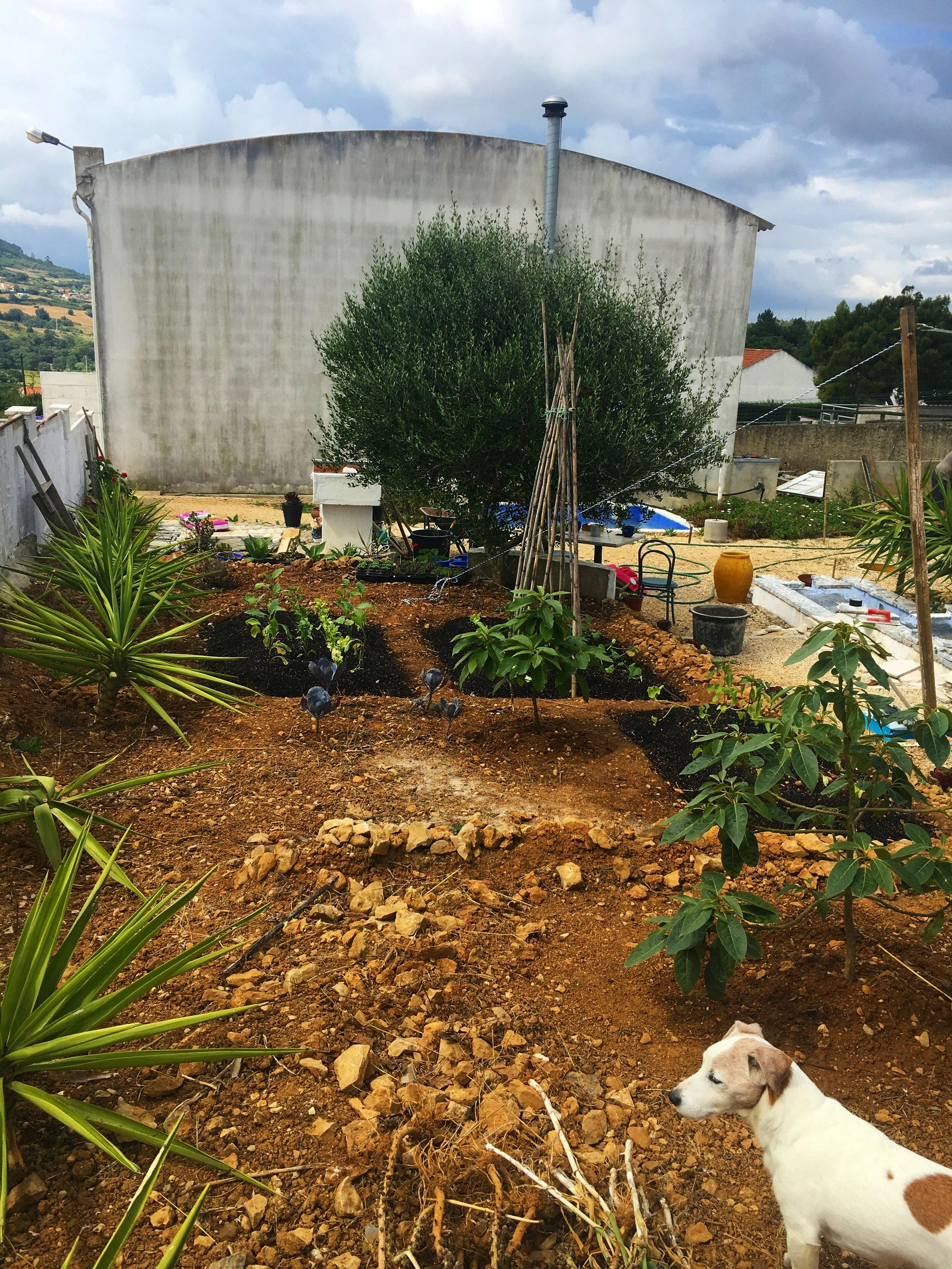 Art-cafe-garden-progress.jpg