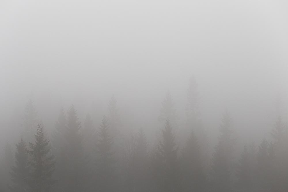 Silent North