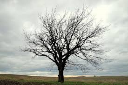 barren tree 2.jpg