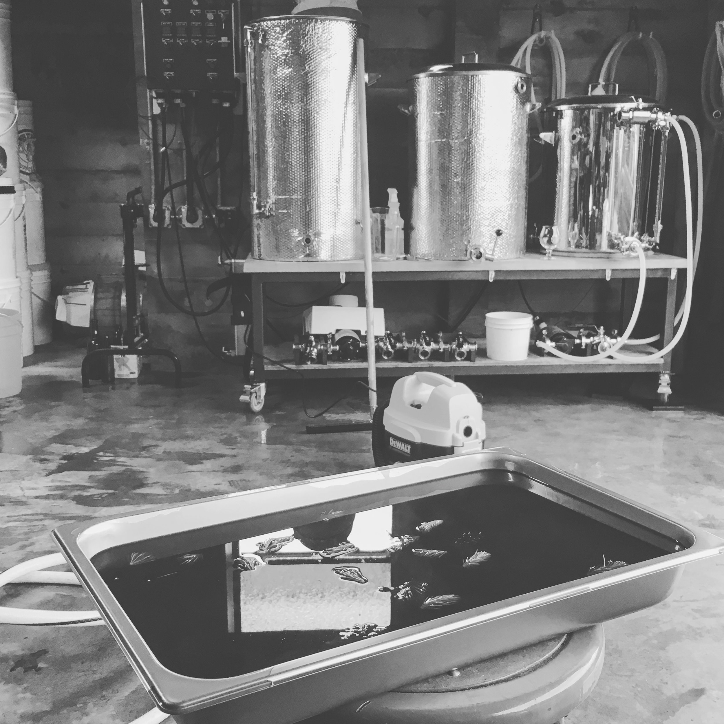 Capturing yeast on a homebrew batch with our 'pilot' cool ship.