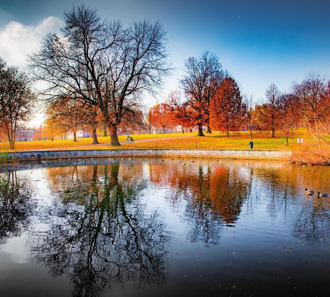 """"""" Late fall in Patterson Park """" Gregory McKay"""