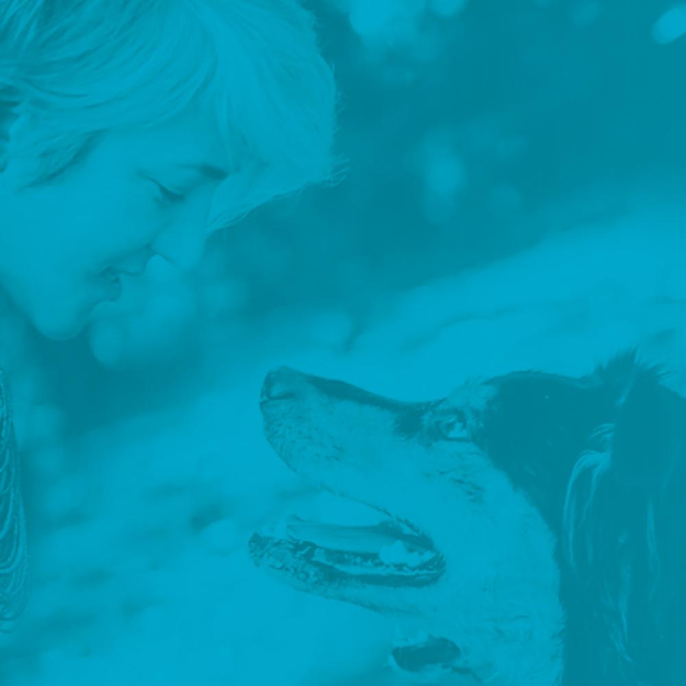 _  queenie's pets  & queenie's coaching  branding, web,  print, copywriting