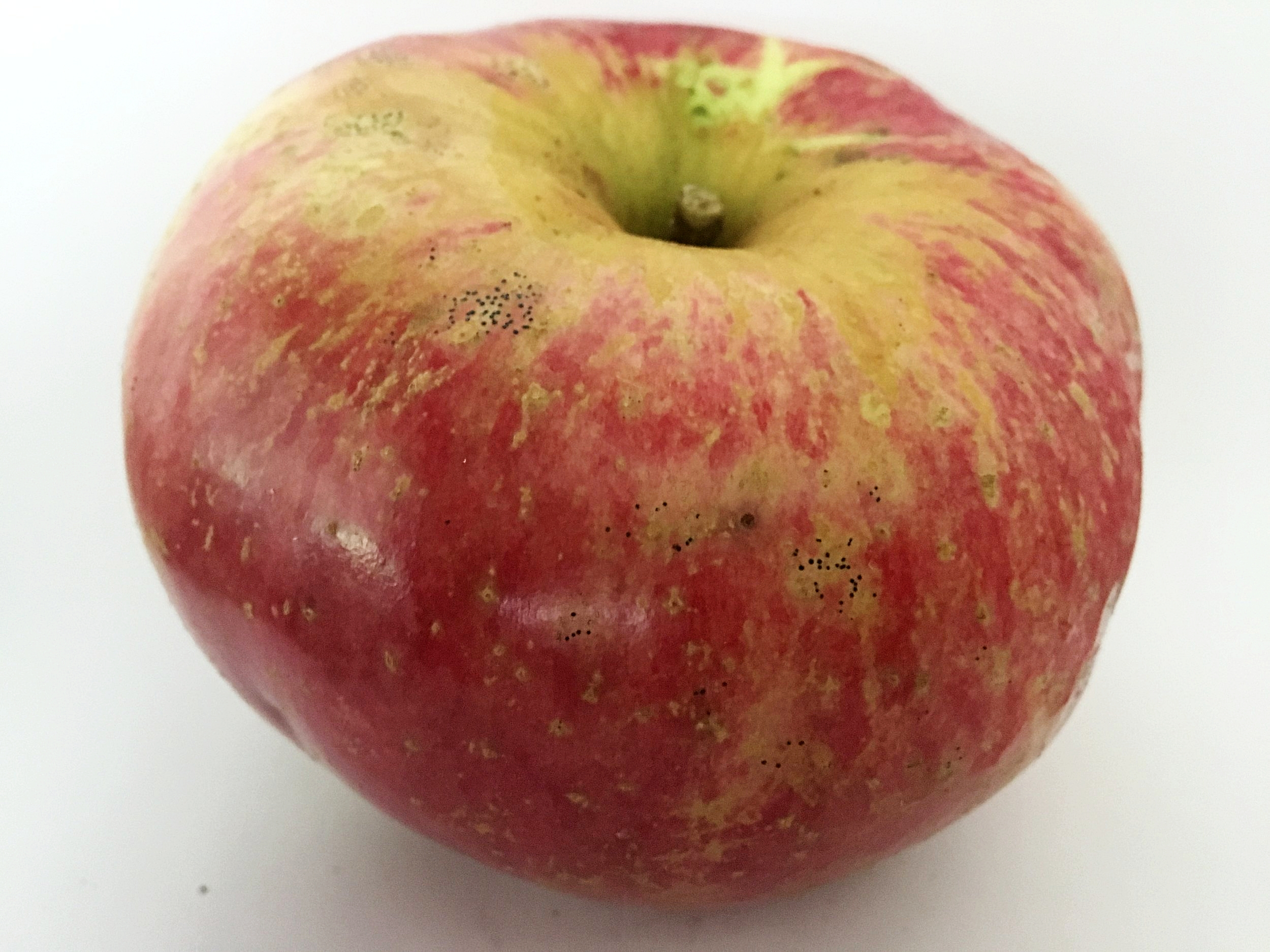 Wolf River Apple