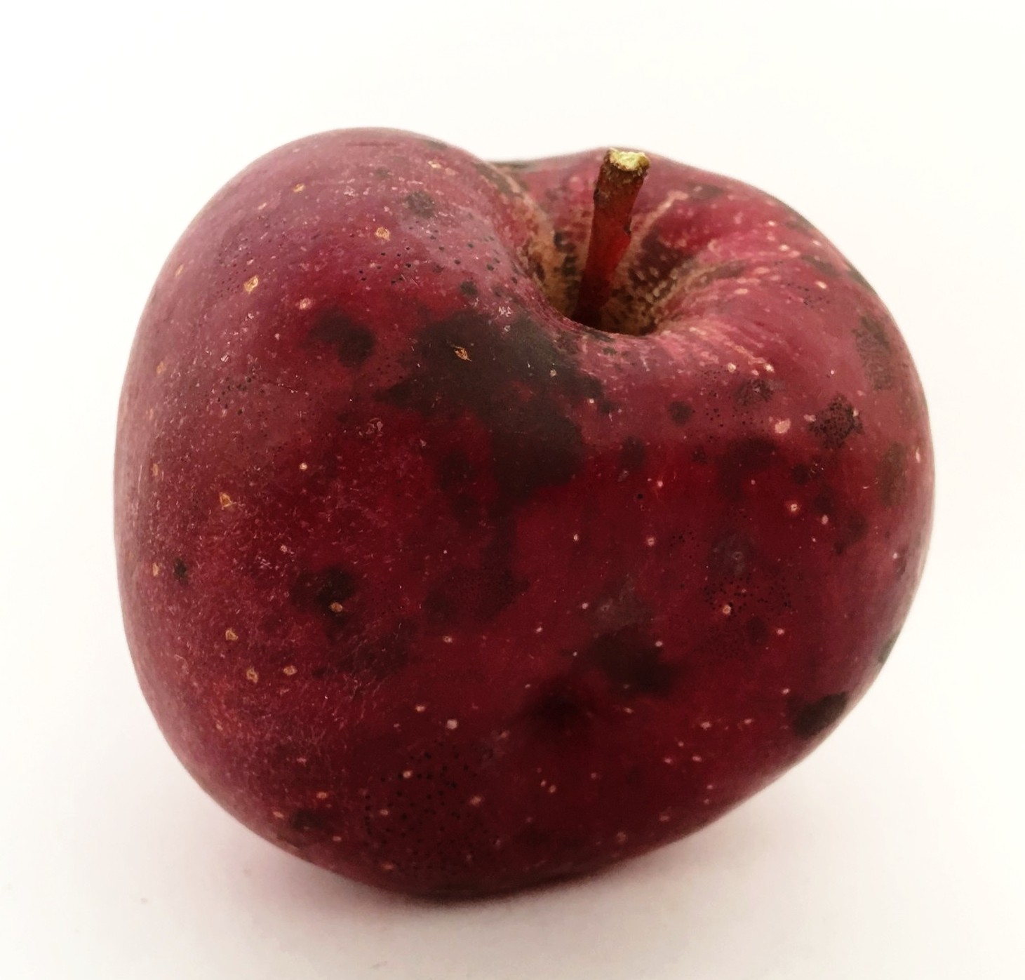Gloster Apple