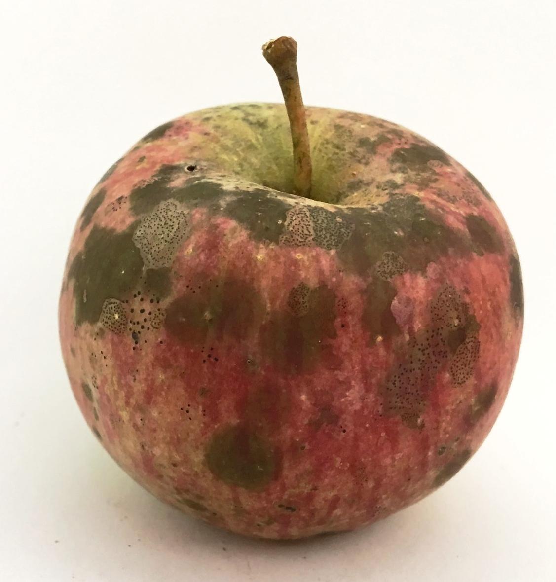 Stump Apple