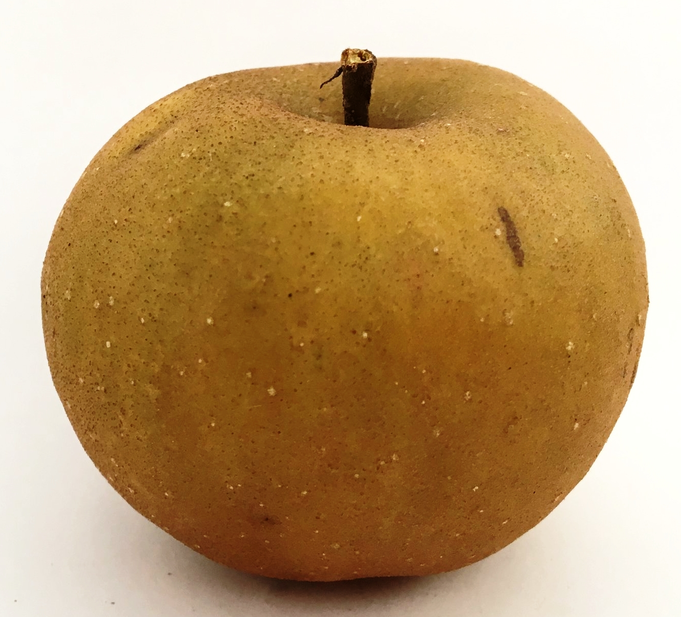 Slippery Cider Apple