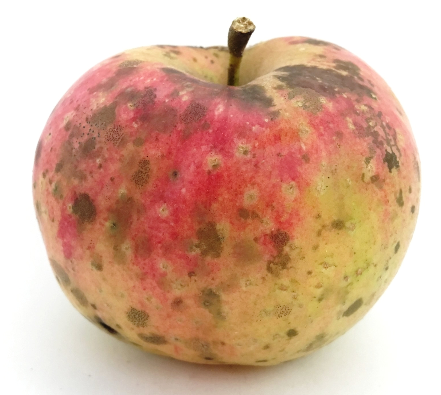 Smokehouse Apple