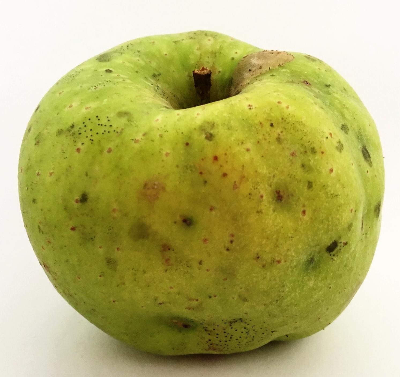 Grimes Golden Apple