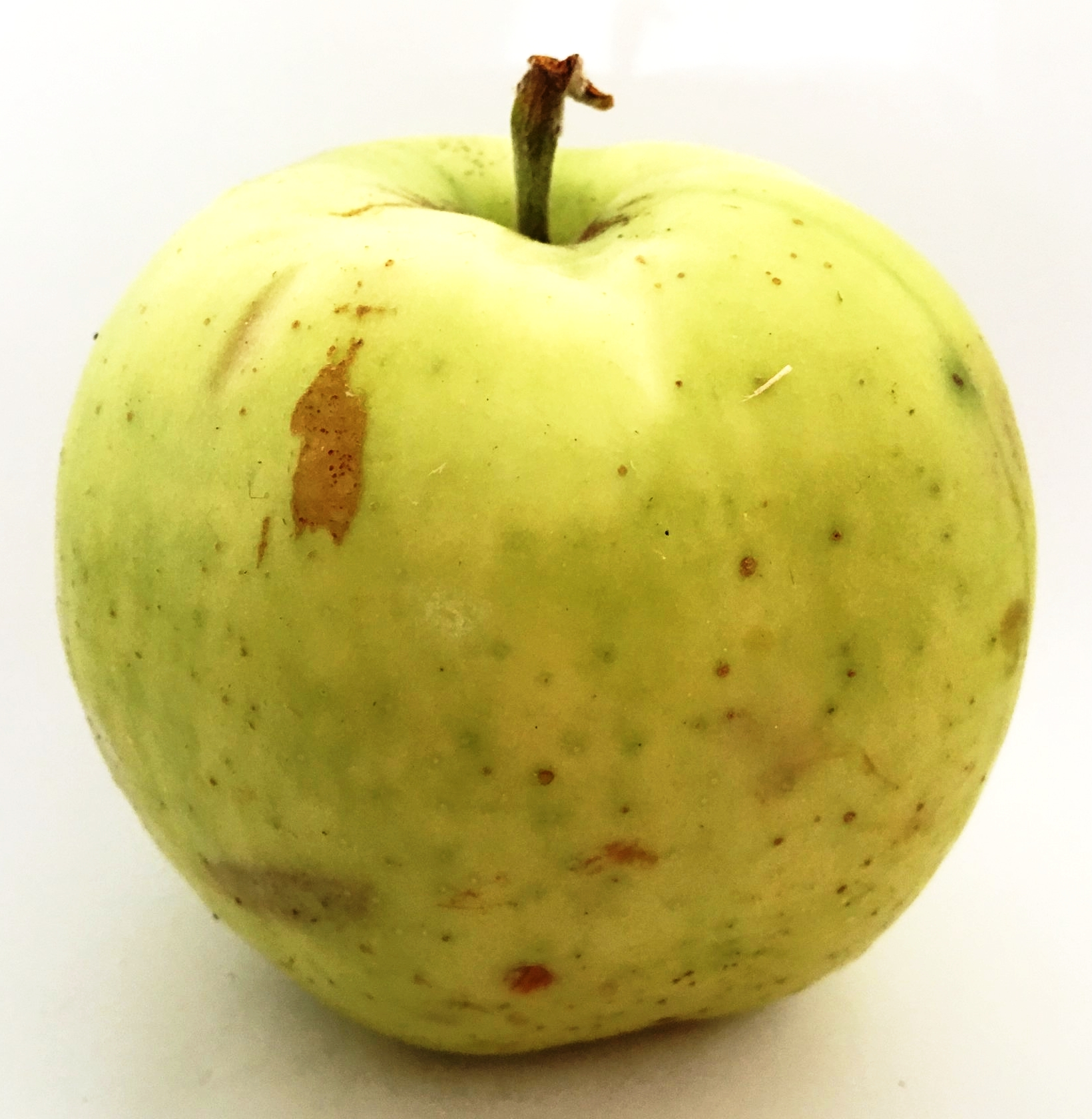 Pitmason Pineapple Apple